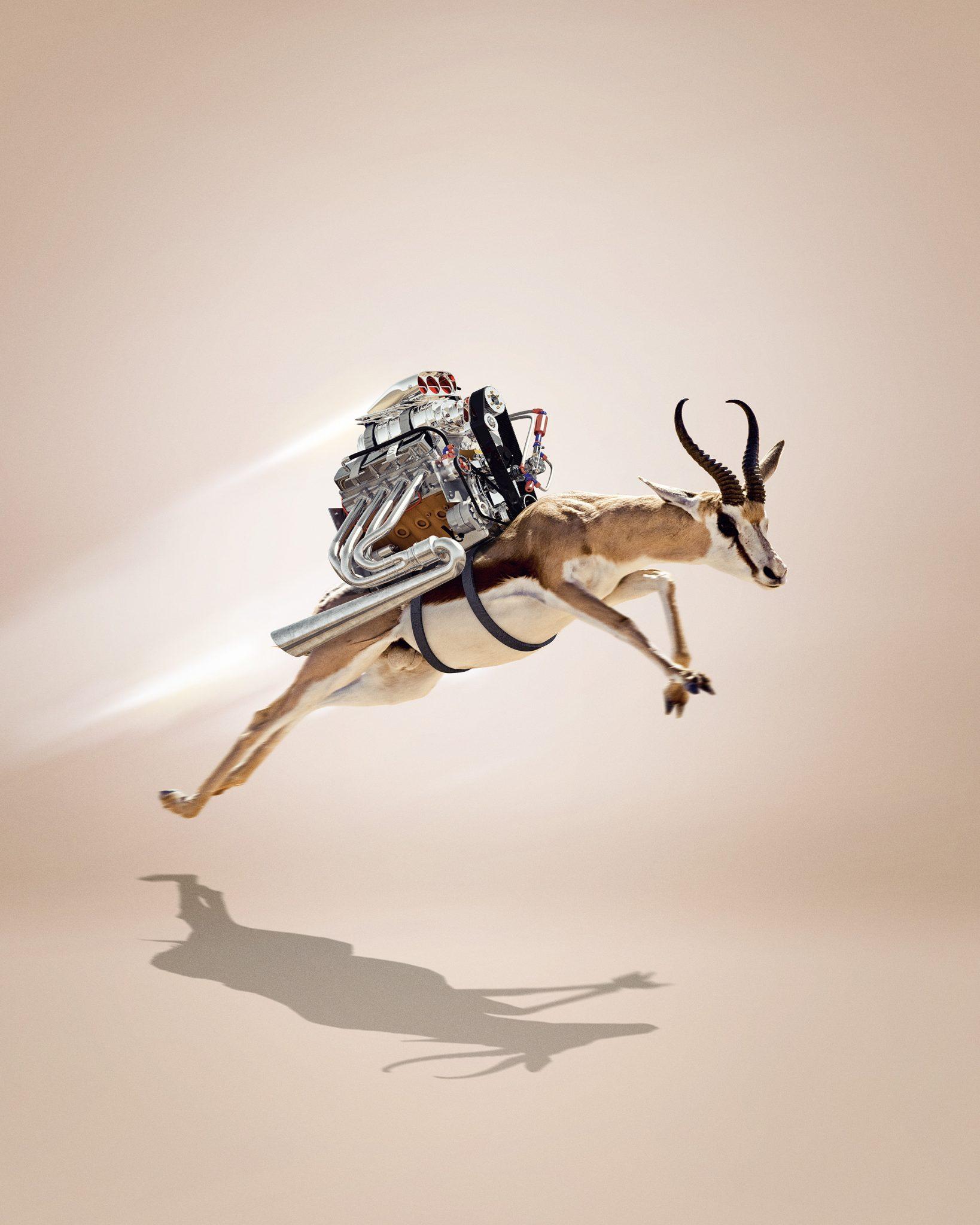gazelle-v81-f